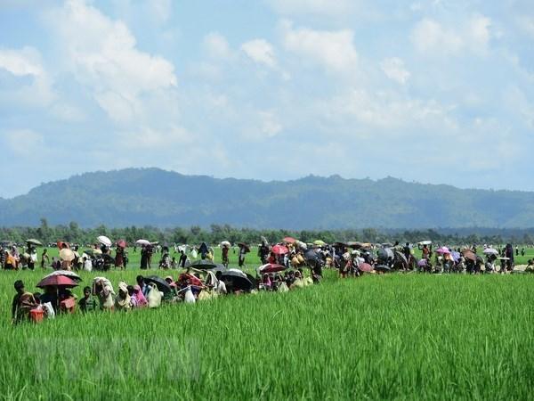 Myanmar alerta inestabilidad regional por riesgos de terrorismo en estado Rakhine hinh anh 1
