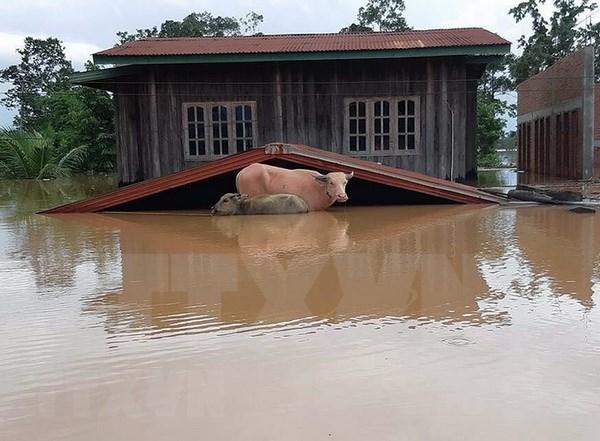 Lluvias e inundaciones causan graves consecuencias en Laos hinh anh 1