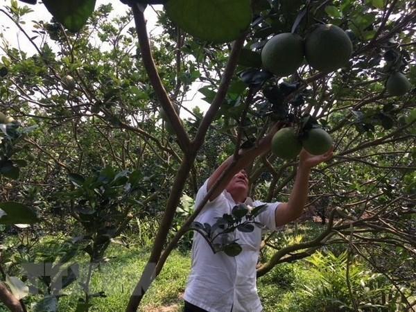 Vietnam acelera aplicacion tecnologica en la agricultura hinh anh 1
