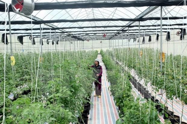 Jovenes taiwaneses buscan oportunidad de cooperacion agricola en Vietnam hinh anh 1