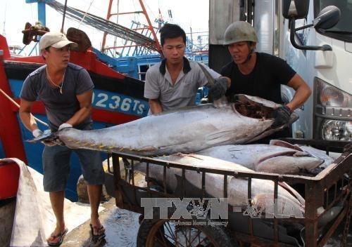 Provincia vietnamita de Thua Thien-Hue dedica 1,5 millones de dolares a favor de pescadores hinh anh 1