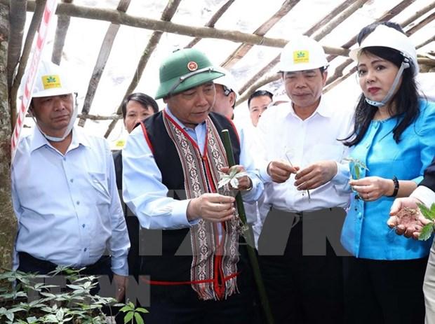 Ginseng Ngoc Linh es tesoro de Vietnam, afirma Premier hinh anh 1