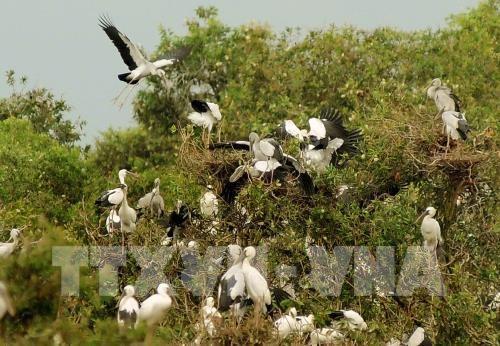 Parque Tram Chim de Vietnam necesita mejor gestion del fuego para conservar ecosistema hinh anh 1