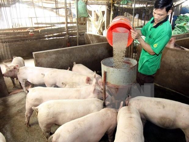 Laos suspende importaciones de carne de cerdo de China hinh anh 1