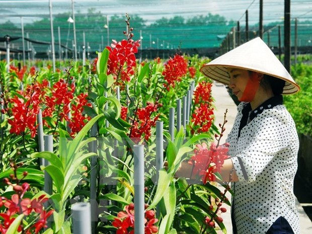 Vietnam, destino atractivo para empresas extranjeras interesadas en agricultura inteligente hinh anh 1