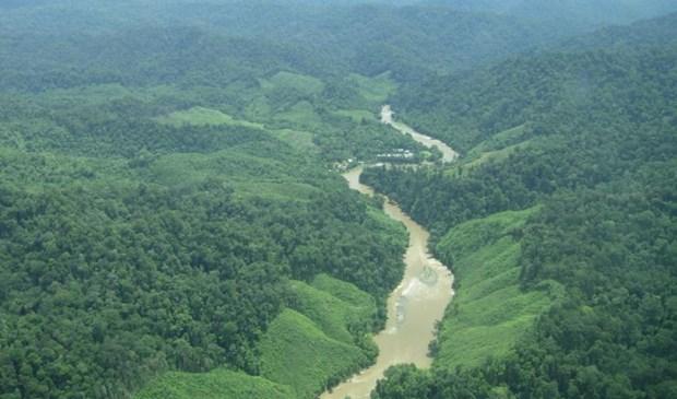 Organizaciones internacionales ofrecen asistencia financiera a Indonesia para reserva forestal hinh anh 1