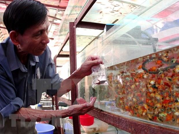Ciudad Ho Chi Minh propone ingresar 20 millones de dolares por exportacion de peces ornamentales hinh anh 1