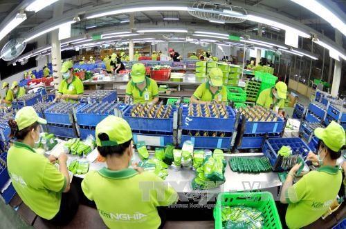 Vietnam ingresa monto multimillonario por exportaciones en ocho meses hinh anh 1