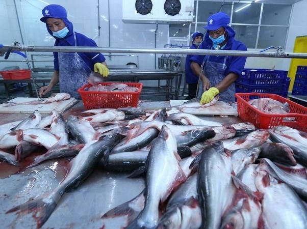 EE.UU. reconoce estandares de calidad de pescados sin escamas de Vietnam hinh anh 1