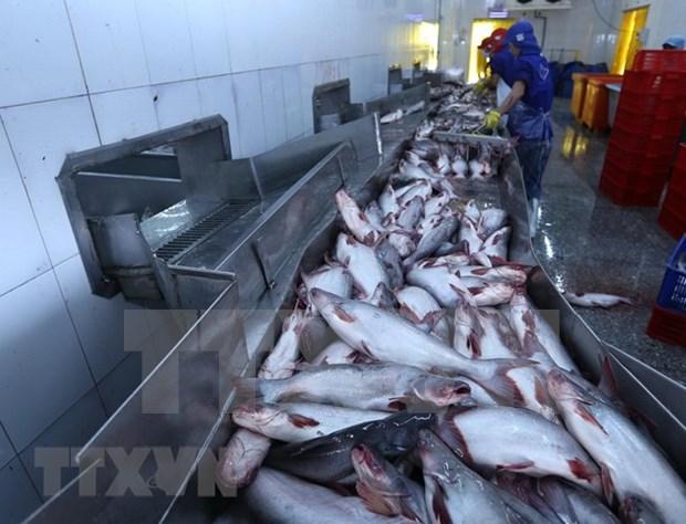 Valor de exportaciones vietnamitas de pescado Tra podria alcanzar dos mil millones de USD hinh anh 1