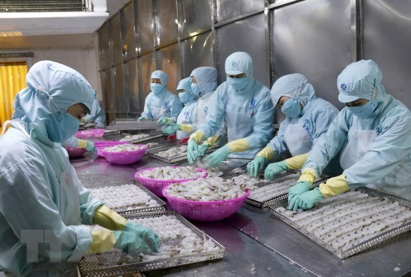 """""""Tarjeta amarilla"""" afecta exportacion de productos acuaticos vietnamitas a Union Europea hinh anh 1"""