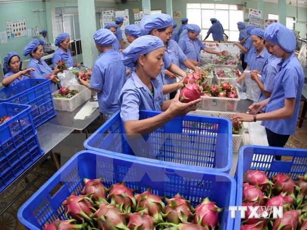Exportaciones de frutas y verduras de Vietnam registran crecimiento record hinh anh 1