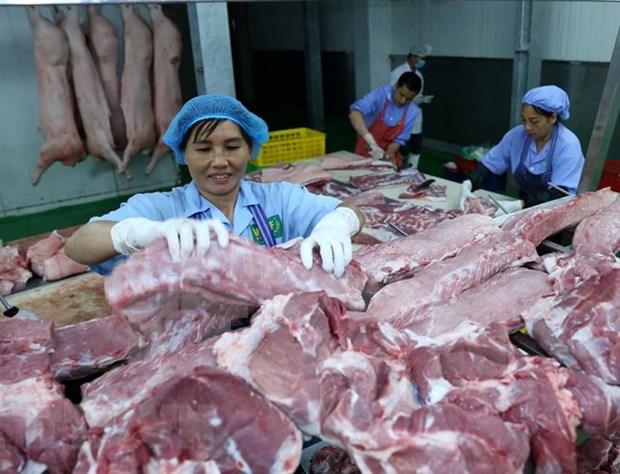 Provincia vietnamita de Quang Ninh adopta medidas drasticas contra peste porcina africana hinh anh 1