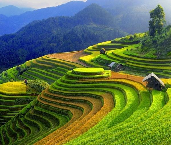 Celebraran semana cultural y festival de terrazas de arroz en provincia vietnamita hinh anh 1