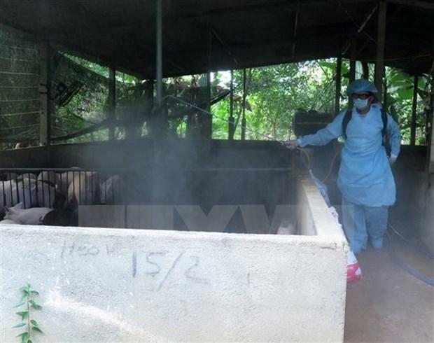 Debaten en Hanoi medidas preventivas contra la peste porcina africana hinh anh 1