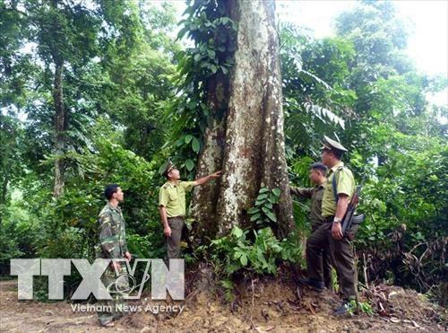 Proyectan recaudar fondo millonario de servicios forestales en Vietnam hinh anh 1