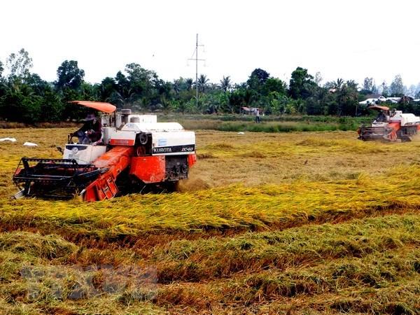 Empresas arroceras vietnamitas enfrentan oportunidades y desafios de la liberalizacion comercial hinh anh 1