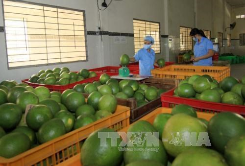 Provincia norvietnamita Phu Tho adopta estrategia para promover marcas comerciales hinh anh 3