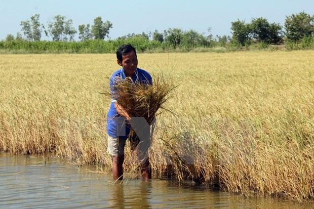 Aumento del nivel del mar amenaza a provincia Kien Giang, principal productora de arroz de Vietnam hinh anh 1