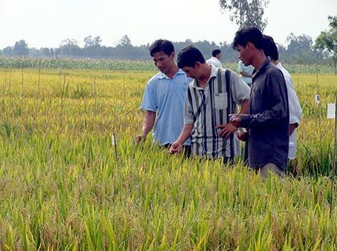 Vietnam promueve cooperacion con Surcorea en cadena de valor de produccion agricola hinh anh 1