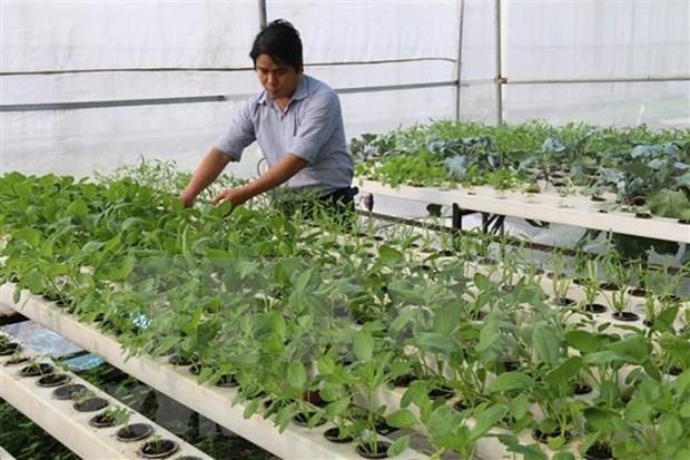 Vietnam y la India aspiran a agilizar lazos en agricultura de alta tecnologia hinh anh 1