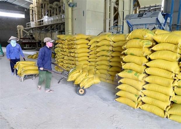 Exportadores de arroz vietnamitas por contrarrestar impactos de guerra comercial Estados Unidos- China hinh anh 1