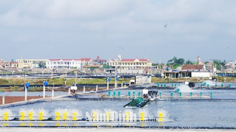 Distrito costero vietnamita de Hai Hau desarrolla economia maritima hinh anh 1