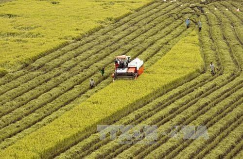 Provincia vietnamita de Hau Giang coopera con Corea del Sur para promover agricultura de alta tecnologia hinh anh 1