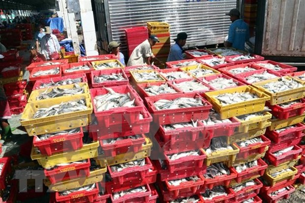 Comision de Pesca del Parlamento Europeo valora esfuerzos de Vietnam por levantar tarjeta amarilla hinh anh 1