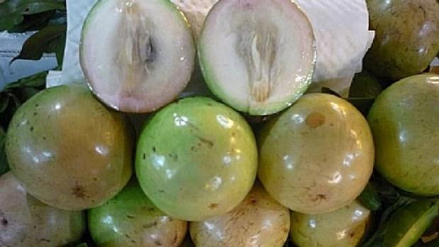 Vietnam continua exportando caimito a Estados Unidos hinh anh 1