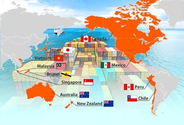 CPTPP afectara al desarrollo de la industria de acero de Vietnam, destacan expertos hinh anh 1