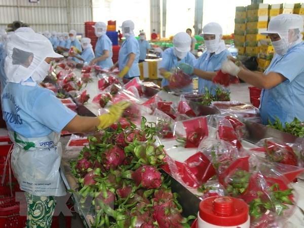Exportaciones de frutas y vegetales de Vietnam crecieron en 15,5 por ciento en 10 meses hinh anh 1