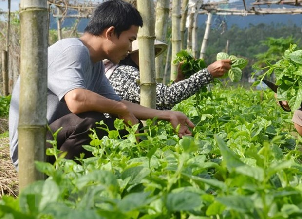 Grupo vietnamita FLC planea ampliar su participacion en sector agricola hinh anh 1