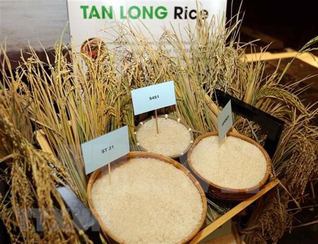 Vietnam exporto cinco millones 200 mil toneladas de arroz en octubre hinh anh 1