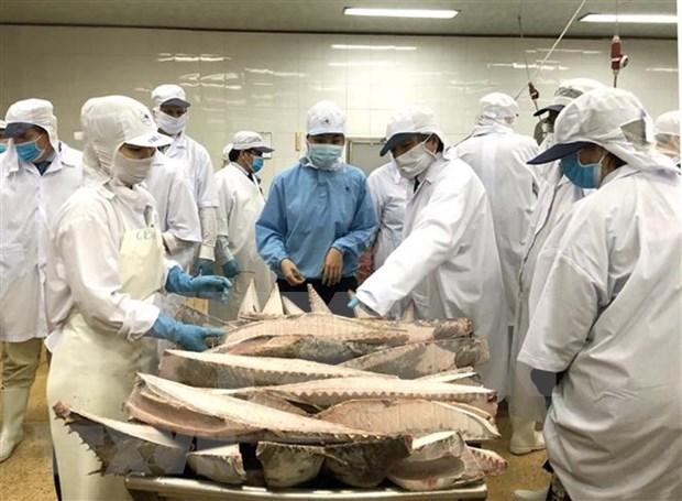 Parlamento Europeo aprecia esfuerzos de Vietnam contra la pesca ilegal hinh anh 1