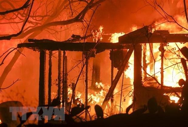 No se reportan victimas vietnamitas en incendios forestales en California, informa Embajada hinh anh 1