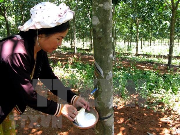 Produccion de caucho natural de Malasia disminuye 22 por ciento en septiembre hinh anh 1
