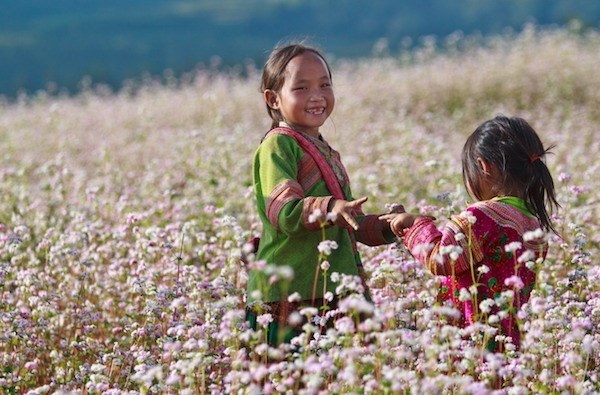 Festival de Flores de Alforfon honrara valores culturales de provincia vietnamita de Ha Giang hinh anh 1
