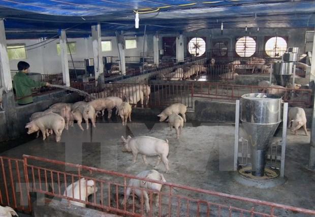 Inauguran fabrica de pienso en provincia norvietnamita de Ha Nam hinh anh 1