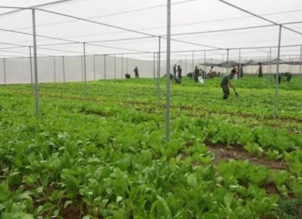 Provincia vietnamita de Phu Tho impulsa aplicacion de tecnologia moderna en agricultura hinh anh 2