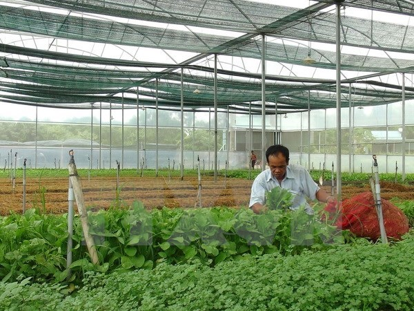 Provincia vietnamita de Phu Tho impulsa aplicacion de tecnologia moderna en agricultura hinh anh 1