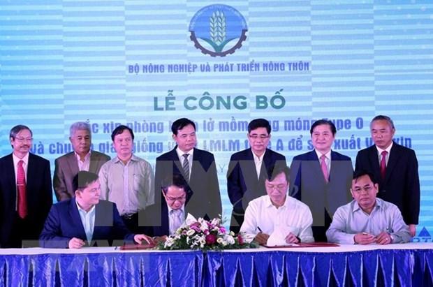 Vietnam desarrolla su propia vacuna contra fiebre aftosa hinh anh 1