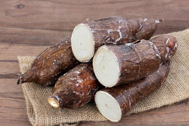 Vietnam exporta dos millones de toneladas de yucas en 10 meses hinh anh 1