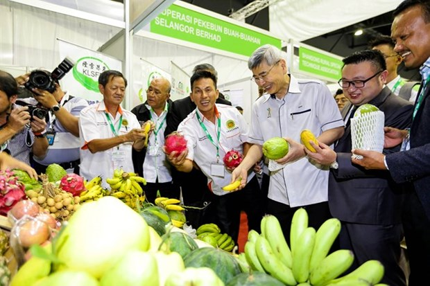 Malasia busca modernizar agricultura hinh anh 1