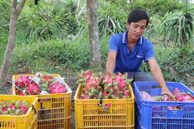 Vietnam, decimoquinto exportador mundial de productos agropecuarios hinh anh 1