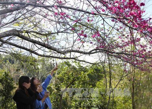 Provincia norvietnamita de Dien Bien espera recibir a mas de 800 mil turistas en 2019 hinh anh 1
