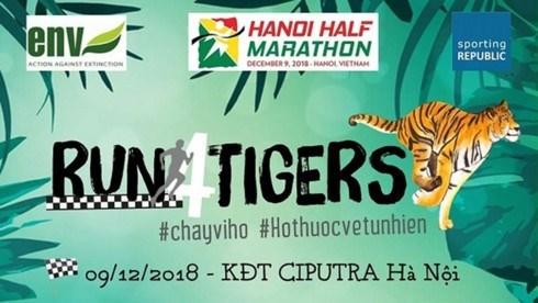 """Centenares de personas participan en el maraton """"Corre por Tigres"""" en Hanoi hinh anh 1"""