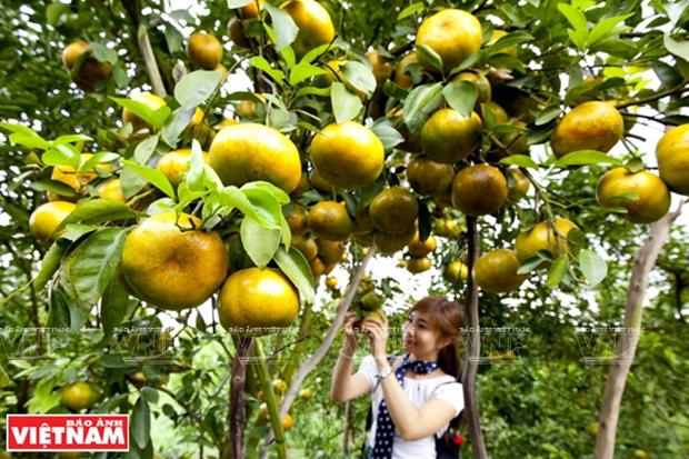 Promoveran el uso de productos nacionales en la feria de frutas en Hanoi hinh anh 1
