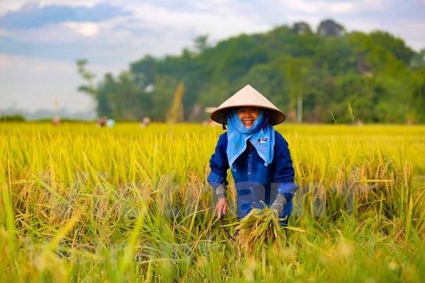 Celebran VII Congreso de la Asociacion de Agricultores de Vietnam hinh anh 1