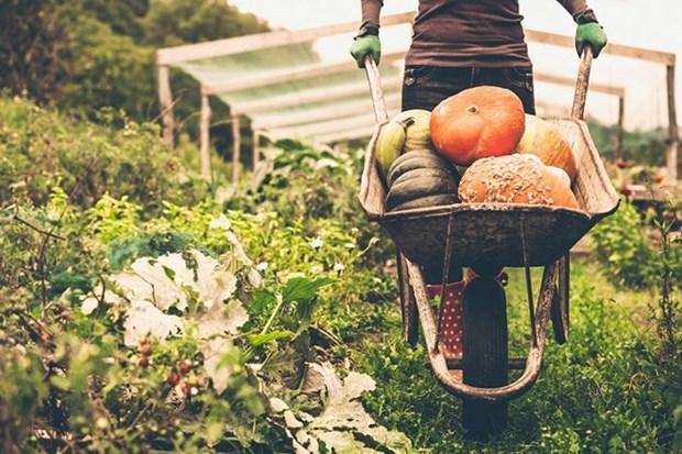 Vietnam mejora control de pesticidas en productos agricolas para impulsar ventas a Seul hinh anh 1